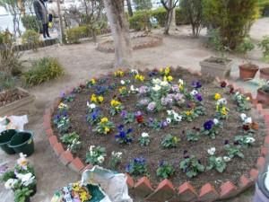 師走の花壇や畑の風景